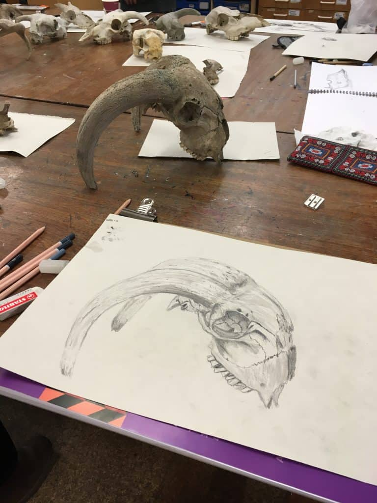 lesson in drawing sheep skulls