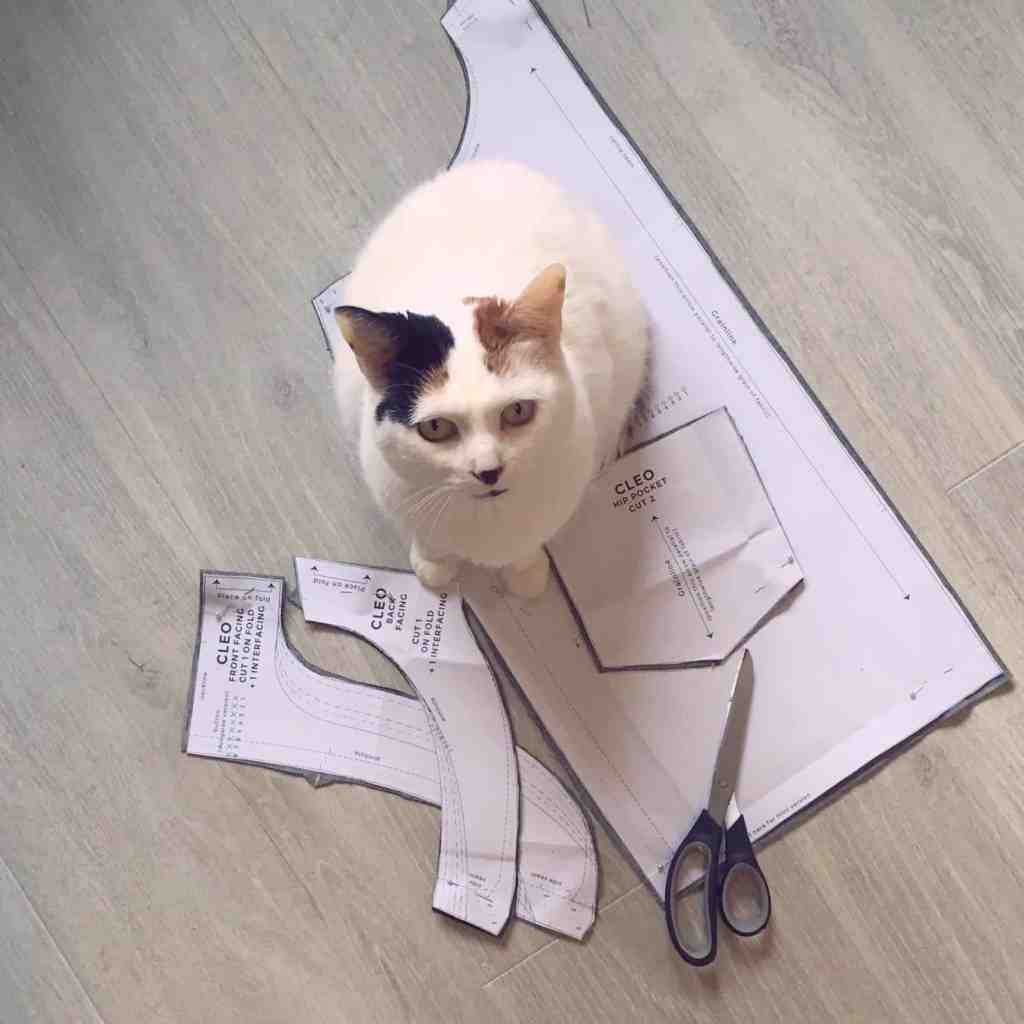 Cat sat on sewing pattern pieces with scissors