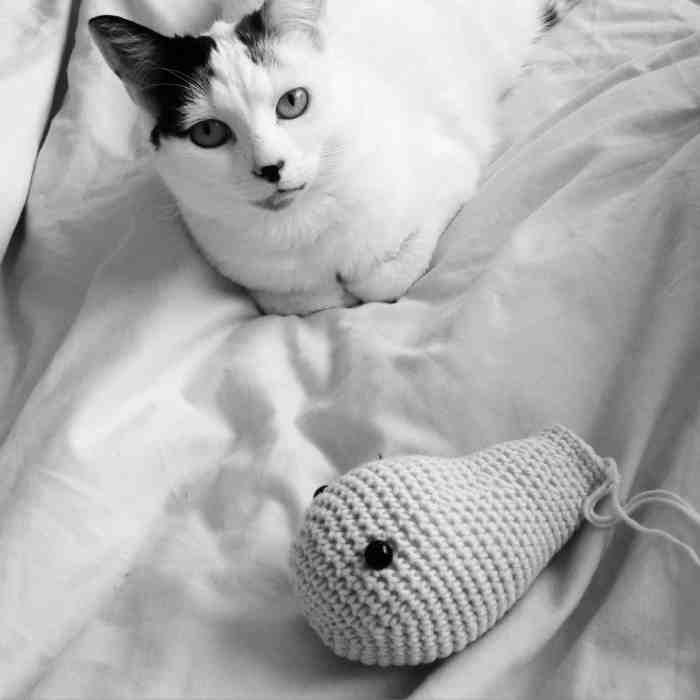 Dora's Cat Millie being Cute