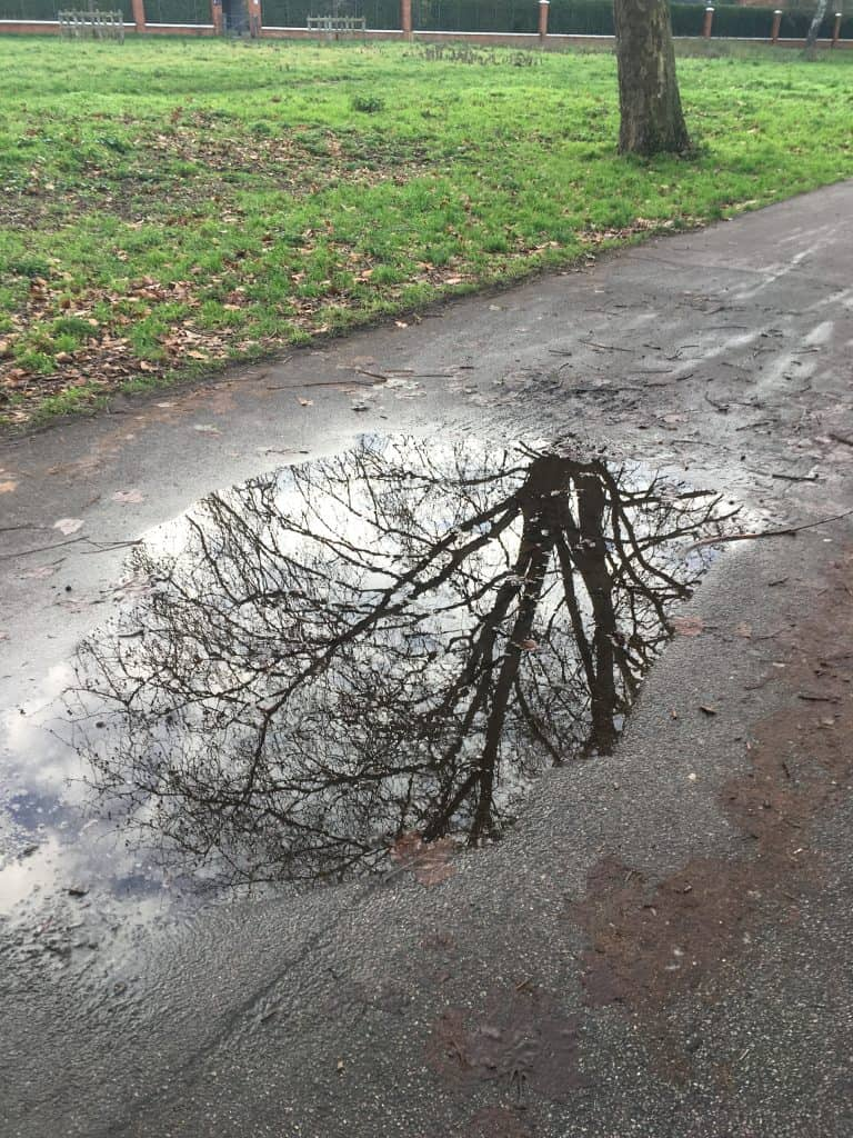 tree reflected in puddle