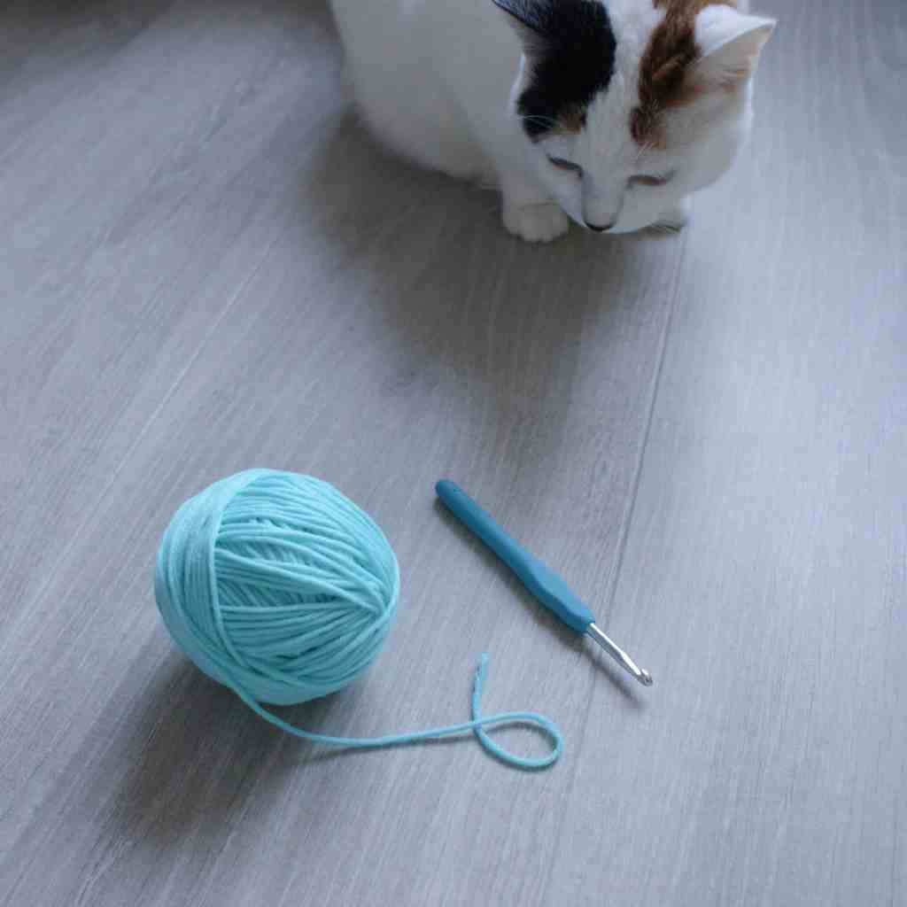 Cat looking at ball ofyarn and crochet hook
