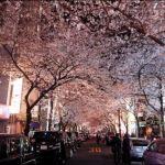 東京,2018,年,桜,花見,名所,夜桜,穴場,スポット,紹介