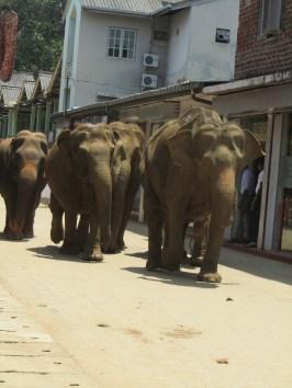 זהירות פילים