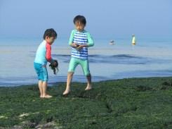 משחקי אצות