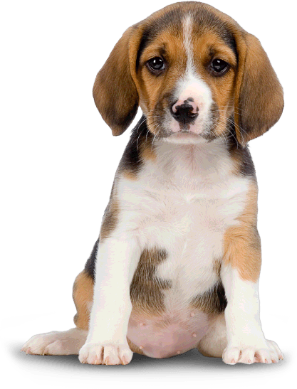 Png Hd Dogs Dog Png Image Png Image 417 Dorchester Paws
