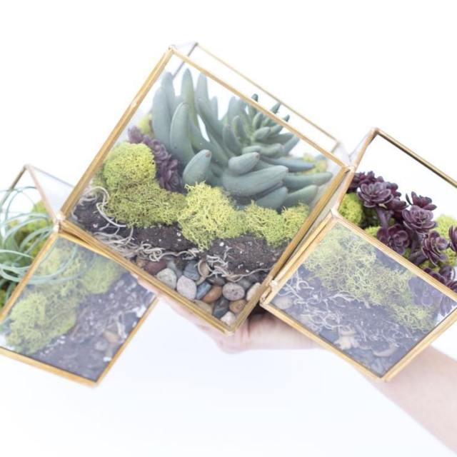 Youll be able to make this simple terrarium with 5hellip