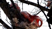 Puppenbaum Engljähriger