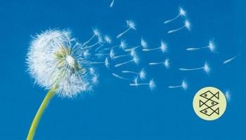 Cecilia Ahern: Zwischen Himmel und Liebe