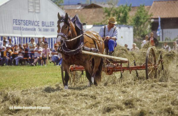 Kaltblutfest anläßlich des Leonhardirittes in Holzhausen bei Teisendorf, Oberbayern, erstmals urkundlich erwähnt 1612, dabei werden die wunderschön herausgeputzten Pferde gesegnet. Bei diesem Kaltblutfest wird die Arbeit mit den herrlichen schweren Kaltblutpferden gezeigt, vornehmlich die Arbeit bei den Bauern, in der Forstwirtschaft, aber auch als Zugpferde für schwere transporte - wie Bier udgl.