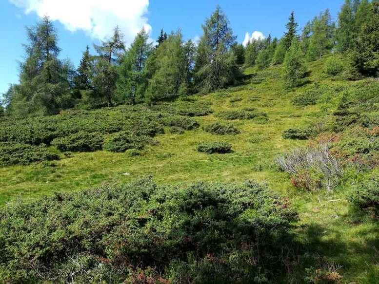 Nichtbewirtschaftung führt zur fortschreitenden Verbuschung einer Landschaft (Fotos: Bauer)