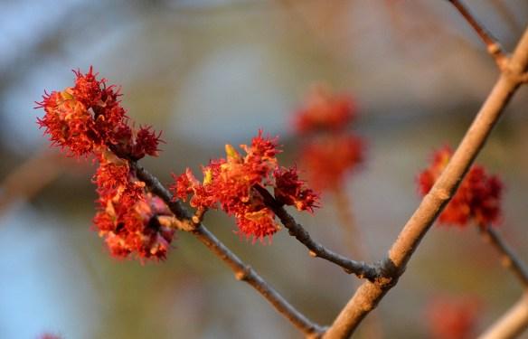A Pretty Spring Day (15)