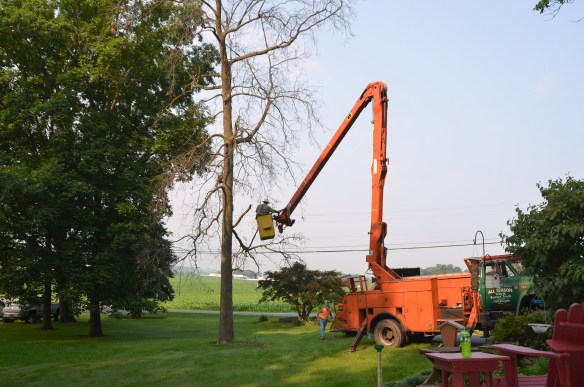 Tree Cutting (1)