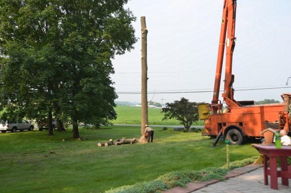 Tree Cutting (17)