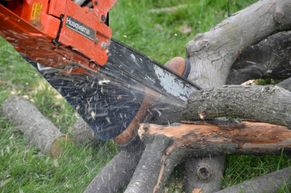 Tree Cutting (46)