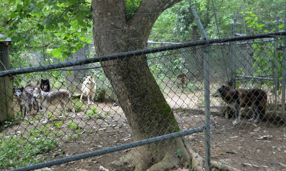 Wolves (16)