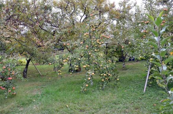 Sam's Orchard (1)