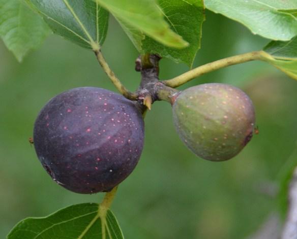Sam's Orchard (20)