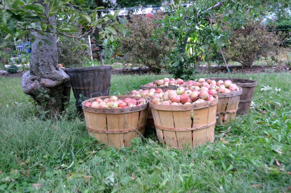 Sam's Orchard (5)