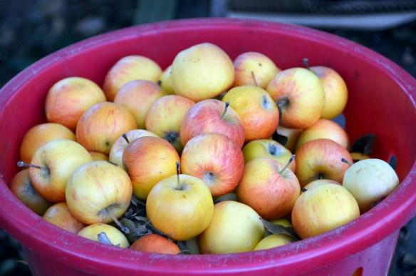 Sam's Orchard (7)