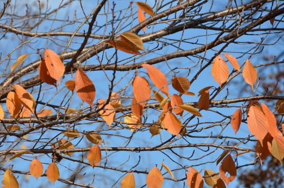 Last flowers and leaves (8)