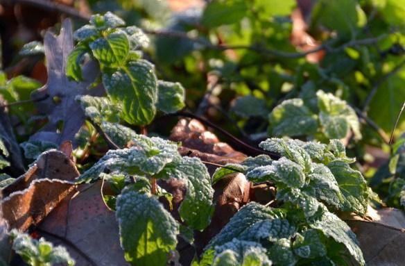 A Frosty Morning (10)