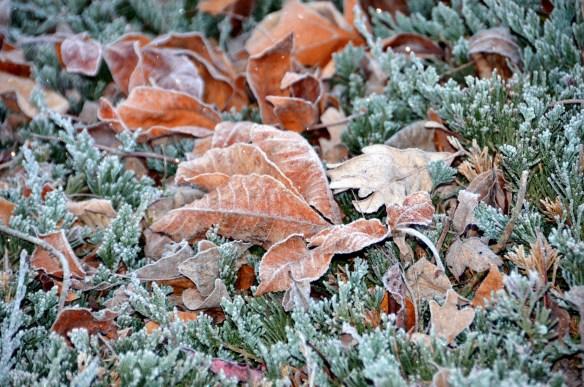 Very Heavy Frost (11)