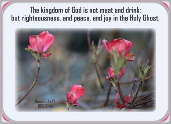 Romans 14-17