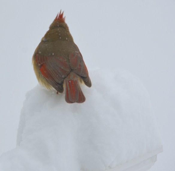 The big snow (20)