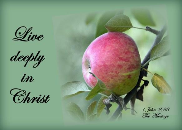 1 John 2-28