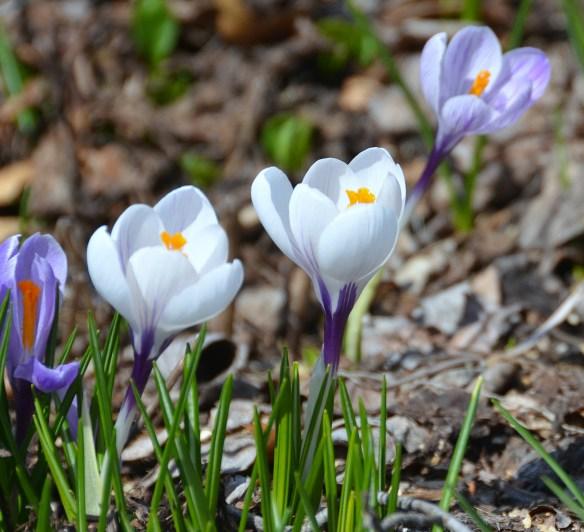 Springtime (5)