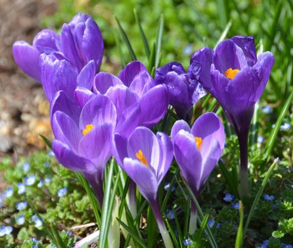 Springtime (6)