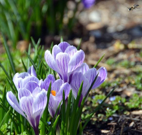 Springtime (8)