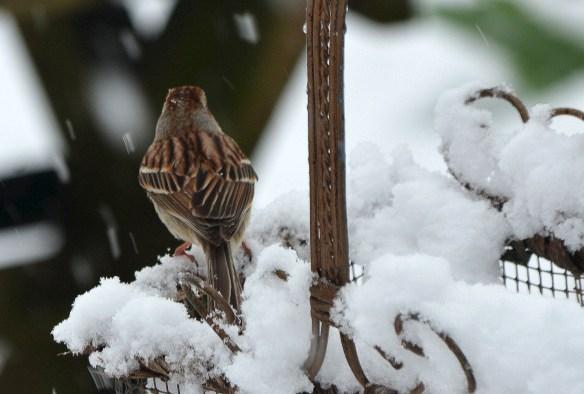Snow (10)