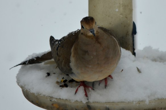 Snow (13)