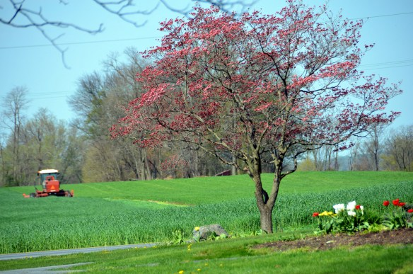 Springtime (10)