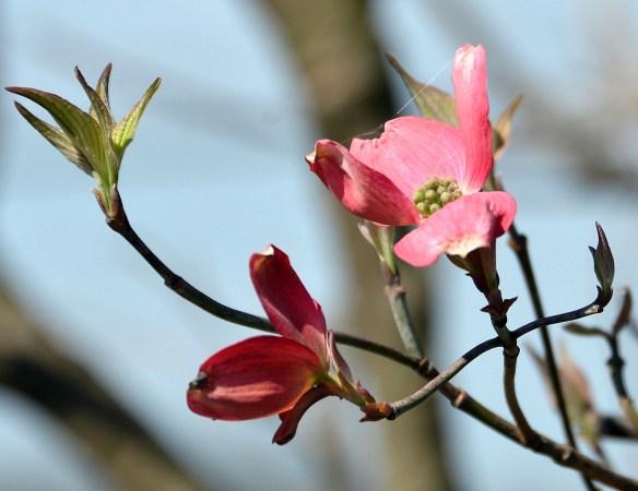 Springtime (16)
