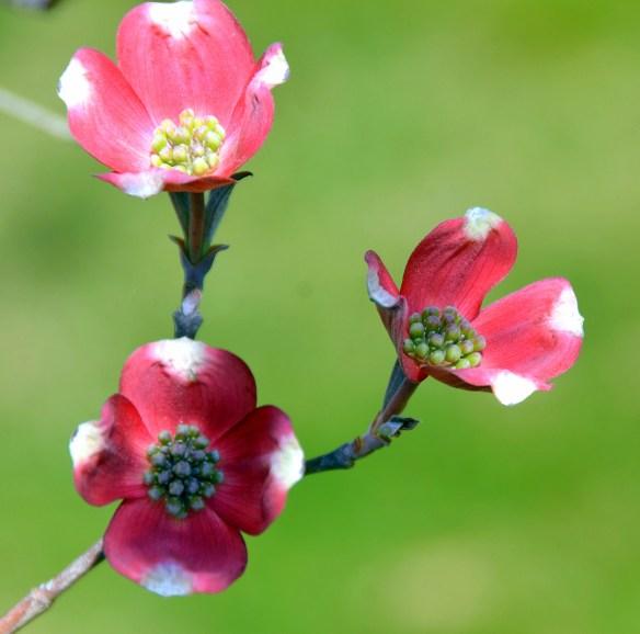 Springtime (18)