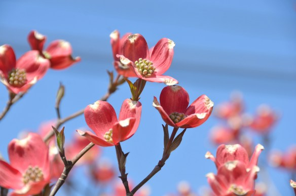 Springtime (21)