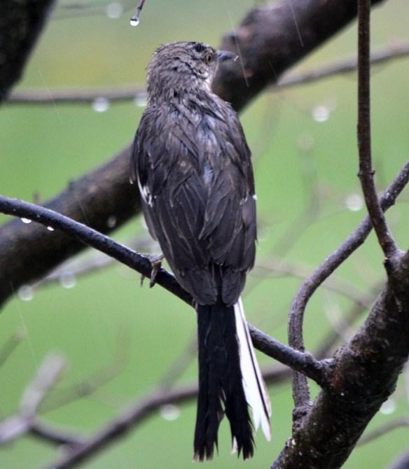 Wed Birds (16)