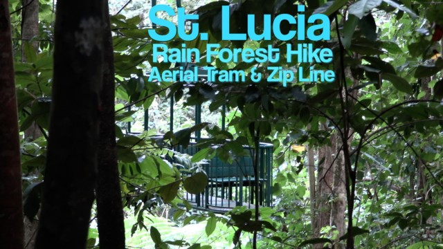 St Lucia, Rain Forest Hike – ship organised tour