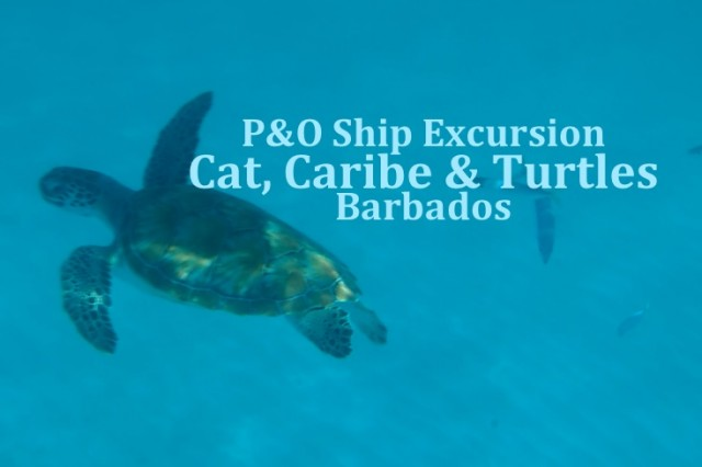 Barbados – P&O Ship Excursion – Cat, Caribe & Turtles