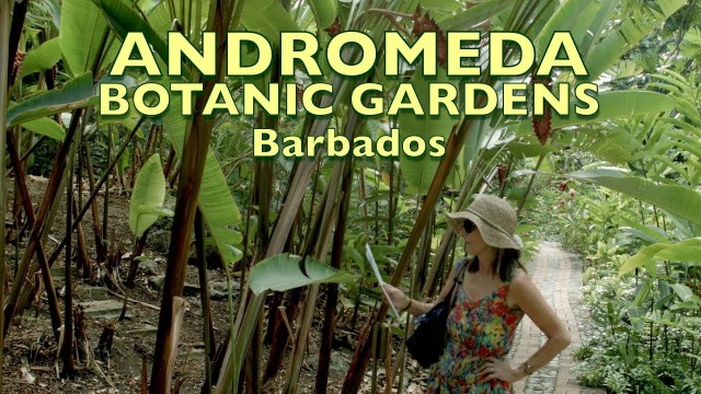 Barbados, Andromeda Botanic Gardens.