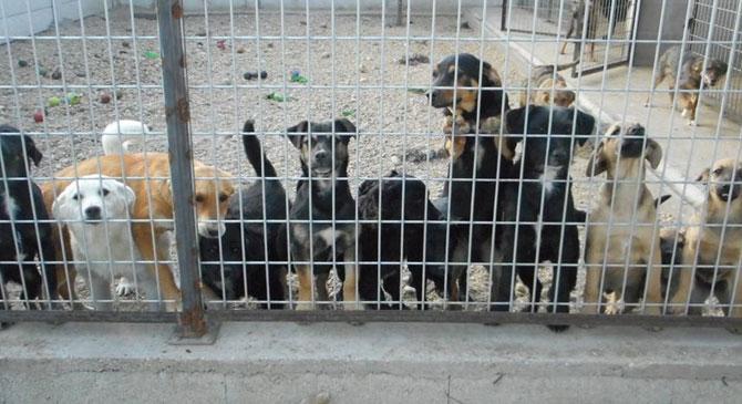 Gazdit keresnek a kutyakölykök