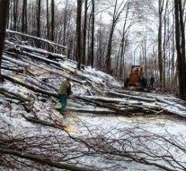A Pilisi Parkerdő készül a klímaváltozásra