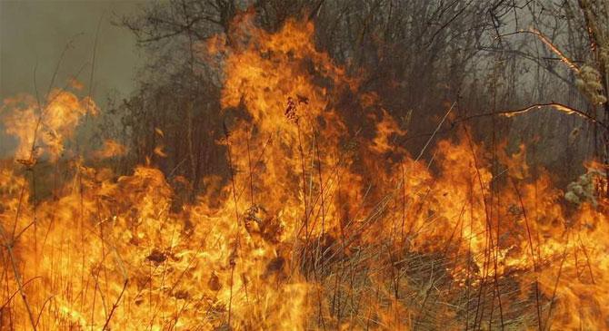 Ismét avartüzekhez siettek a tűzoltók