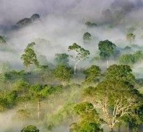 Úgy hűti a környezetét egyetlen fa, mint két klímaberendezés