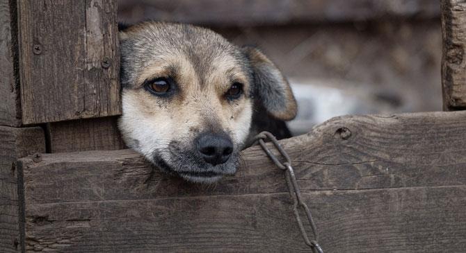 Öt évre eltilthatják az ebtartástól az állatkínzót
