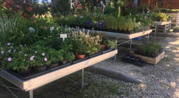 Eszközbeszerzésre nyert forrást egy leányvári kertészet