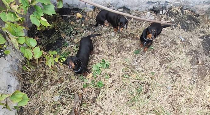 Aknába zuhant kiskutyákon segítettek a sárisápi önkéntesek