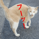 猫は威嚇する時はシャーッ?怒っている時はフーッ?どろ猫日記5回目